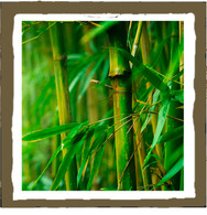 bamboo (4pk)