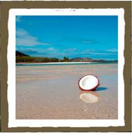 Fiji coconut (4pk)