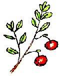Spicy Cranberry Jalapeno Spread ~ 8 oz