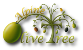 Alpine Olive Tree