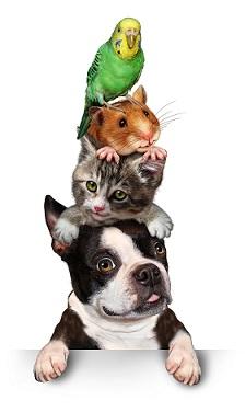 pet-tower.jpg