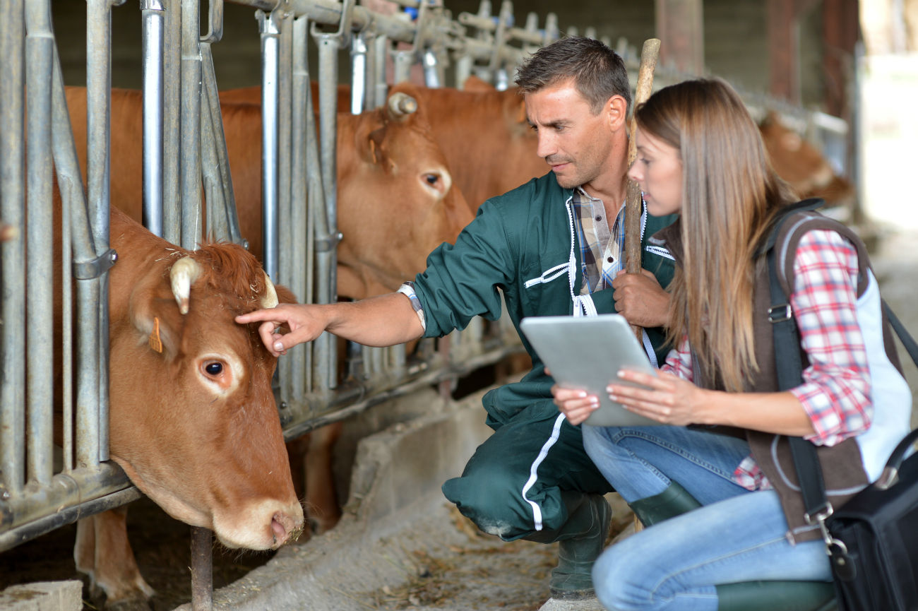 vet-clinic-insurance-vet-checking-diary-cattle.jpg