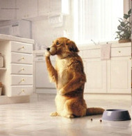 Top 5 Things You Should Avoid Feeding Your Dog