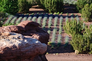 field-rocks-26.jpg