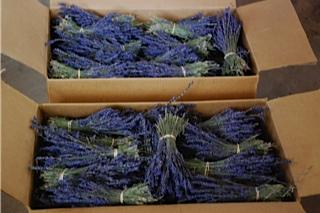 lavender-boxed.jpg