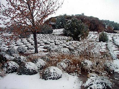 snowfields.jpg