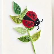 Ladybug Gift Enclosure