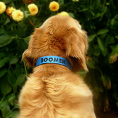 Personalised Dog Collar - Name and/or Phone Number