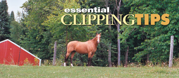 clipping-guides-page-banner.jpg