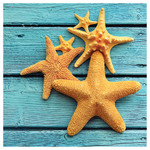 Starfish on Teal Deck - Single Absorbent Coaster