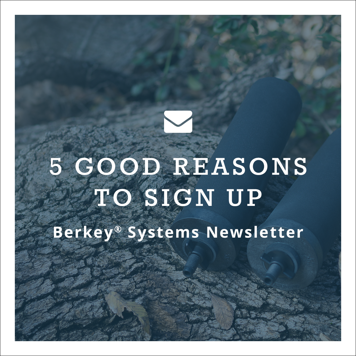 5 good reasons to sign up for our newsletter