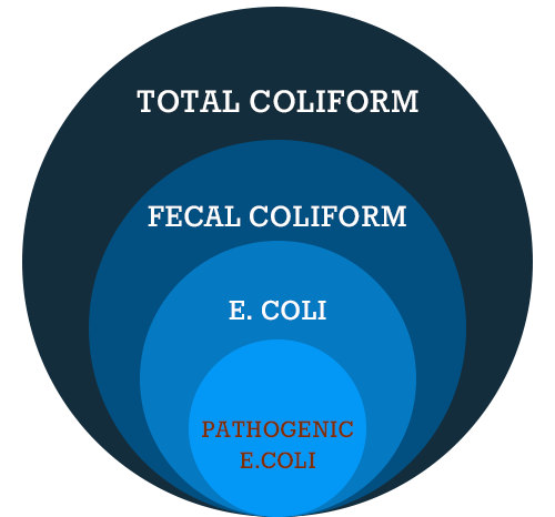 E coli bacteria explained new millennium concepts ltd there are three groups of coliform bacteria each is an indicator of drinking water quality and each has a different level of risk ccuart Image collections