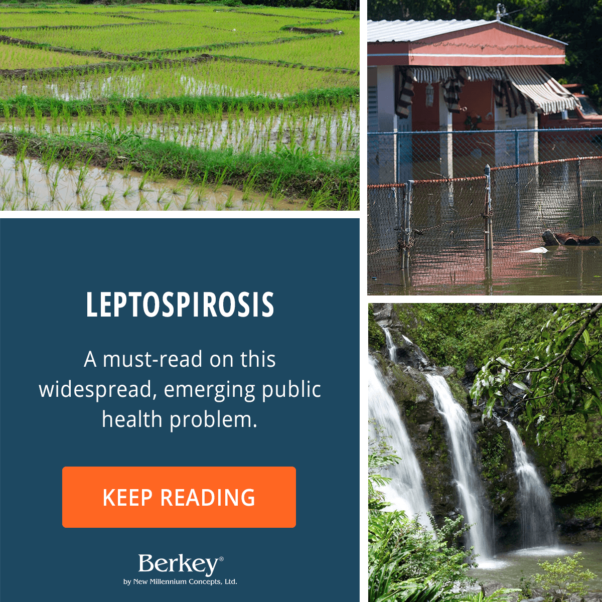 Leptospirosis: A must-read on this widespread, emerging public health problem