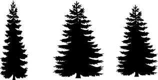 pine-trees.png