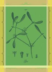 Gui Botanique Vert