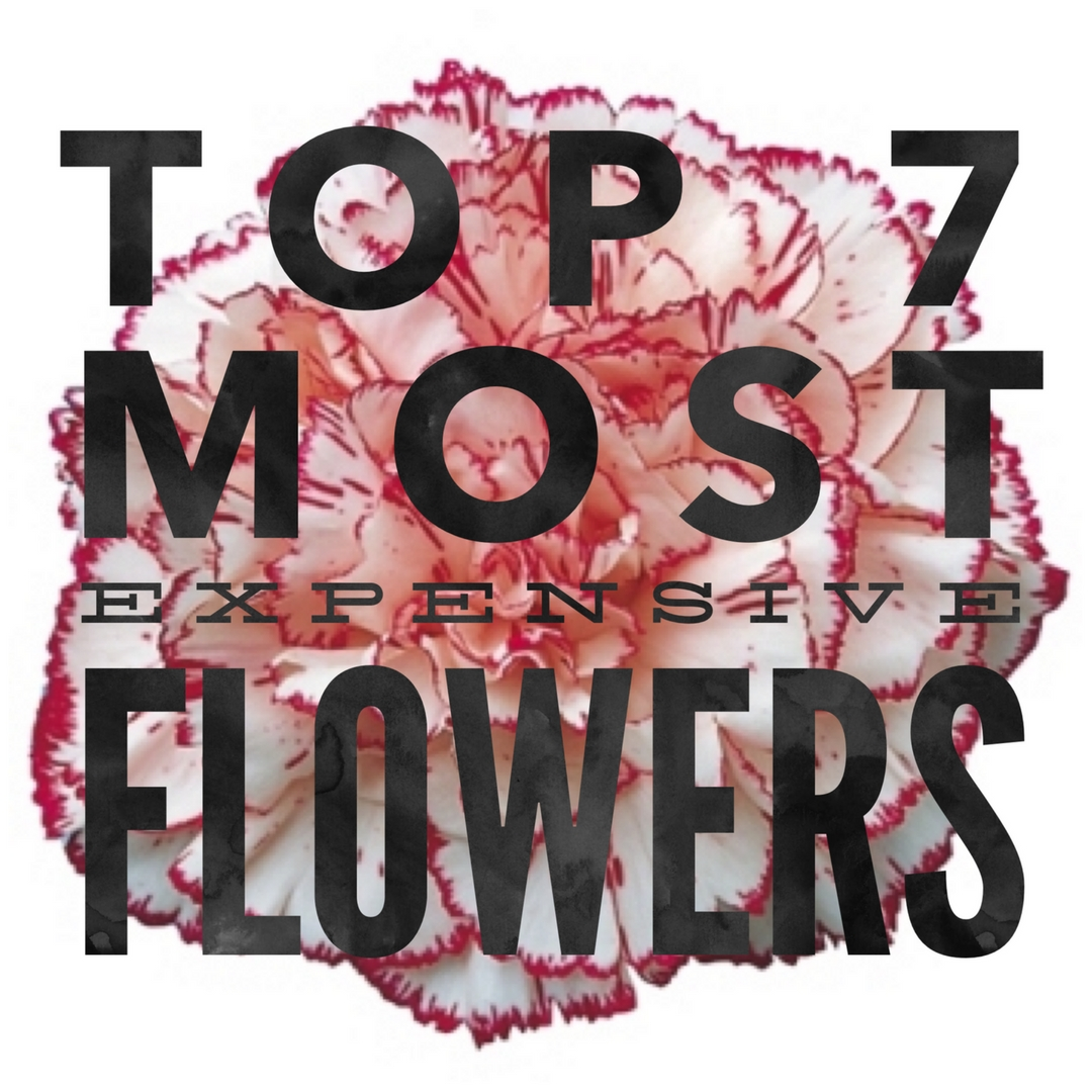Top 7 Most Inexpensive Flowers At Your Flower Shop Enchanted
