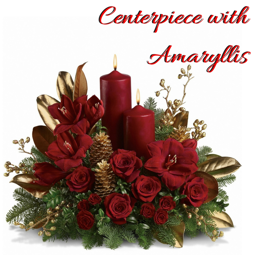 December Flower Spotlight The Amaryllis Enchanted Florist Pasadena