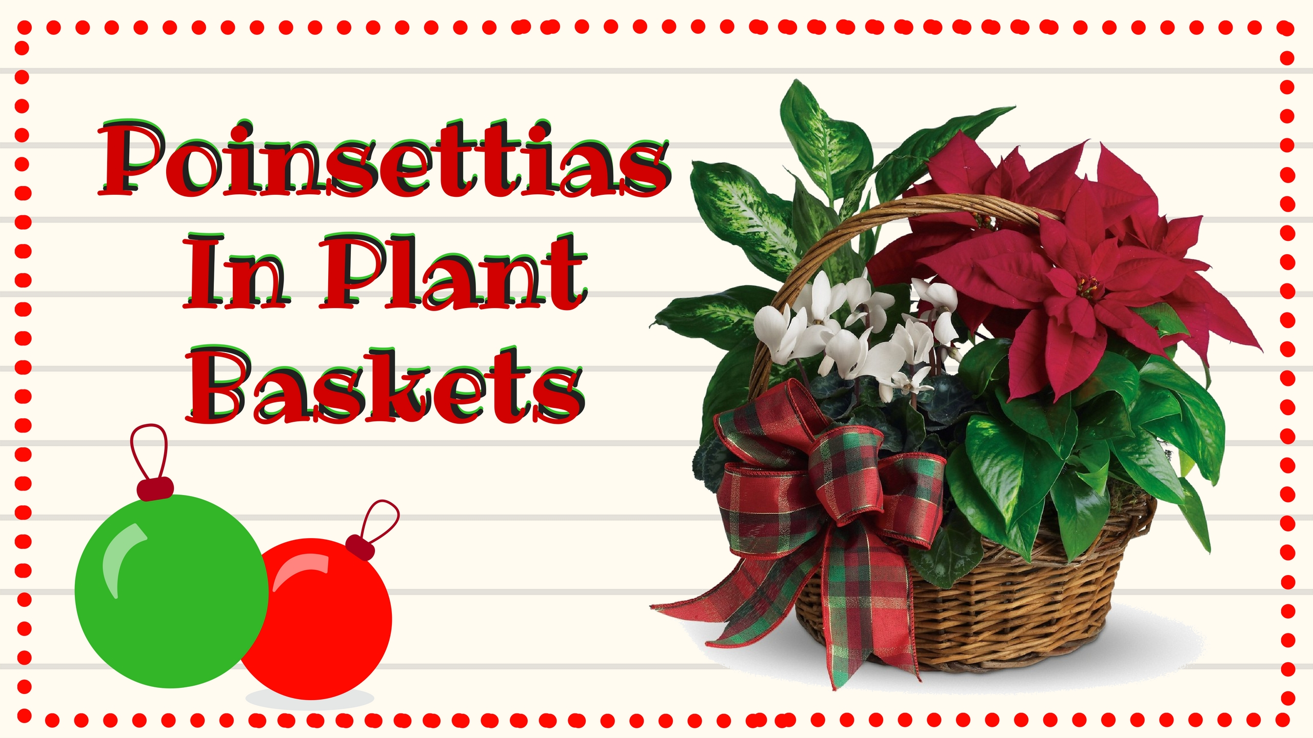 holiday christmas poinsettia plants for delivery 2