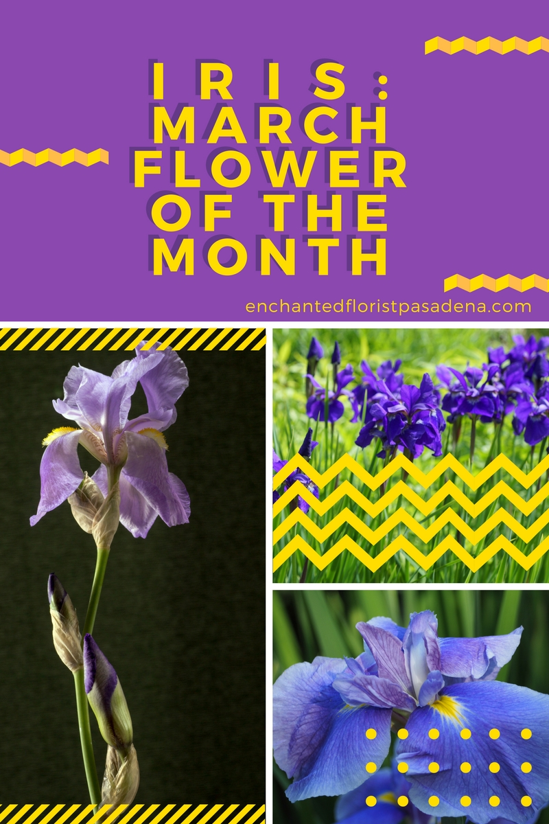 Iris march flower of the month 2018 flower shops in pasadena txgt1522945688 meaning behind the iris flower izmirmasajfo