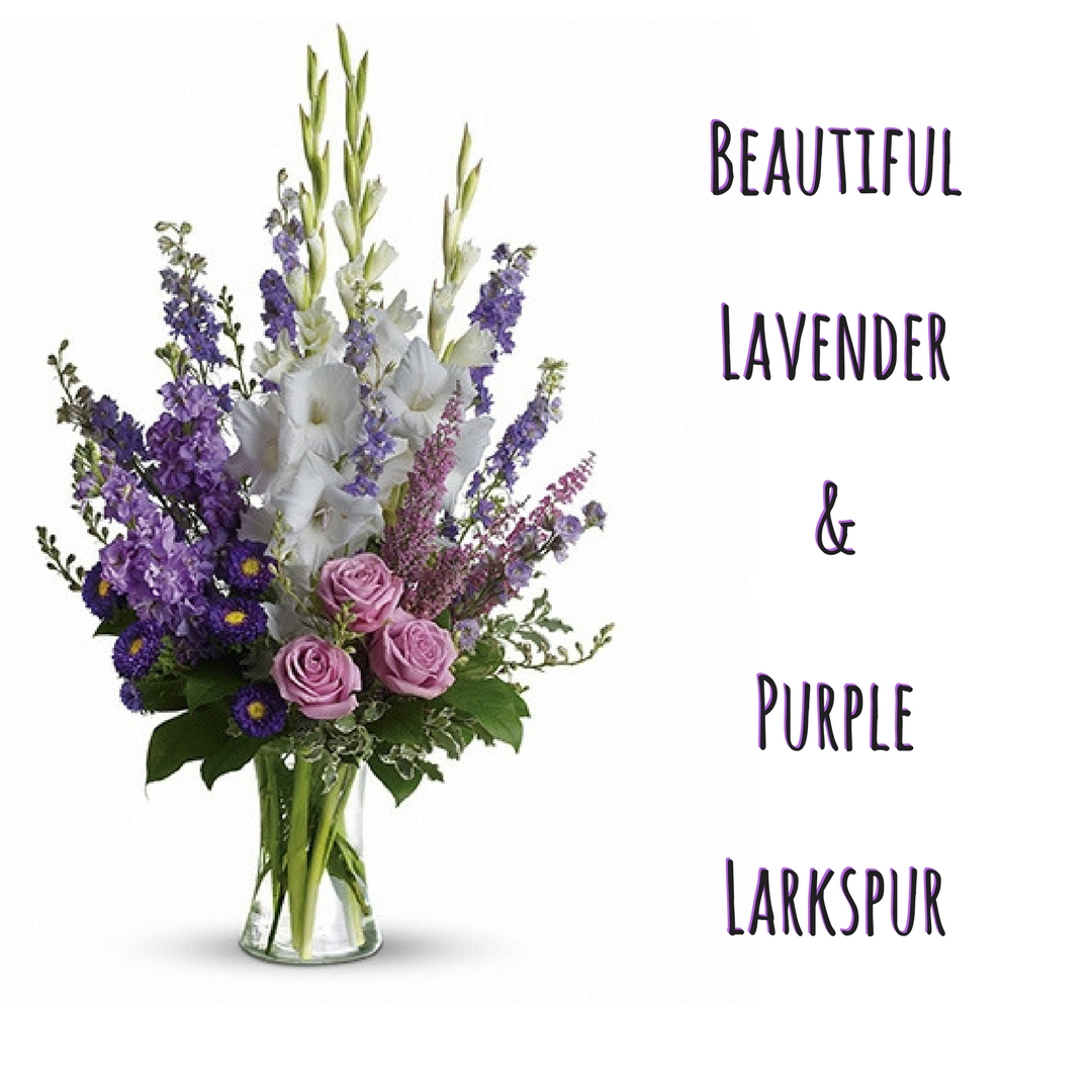 February Flower Spotlight Of The Month The Larkspur Enchanted