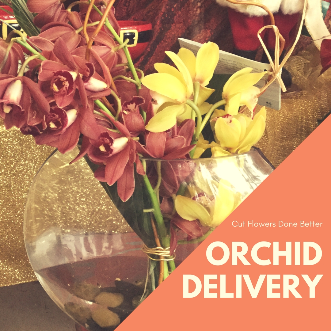 orchid delivery orchids Houston 1