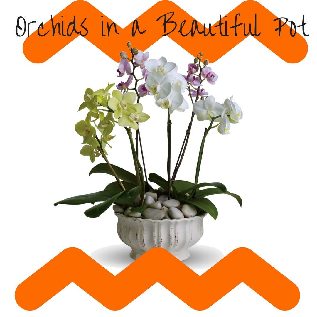 orchid delivery orchids Houston 2