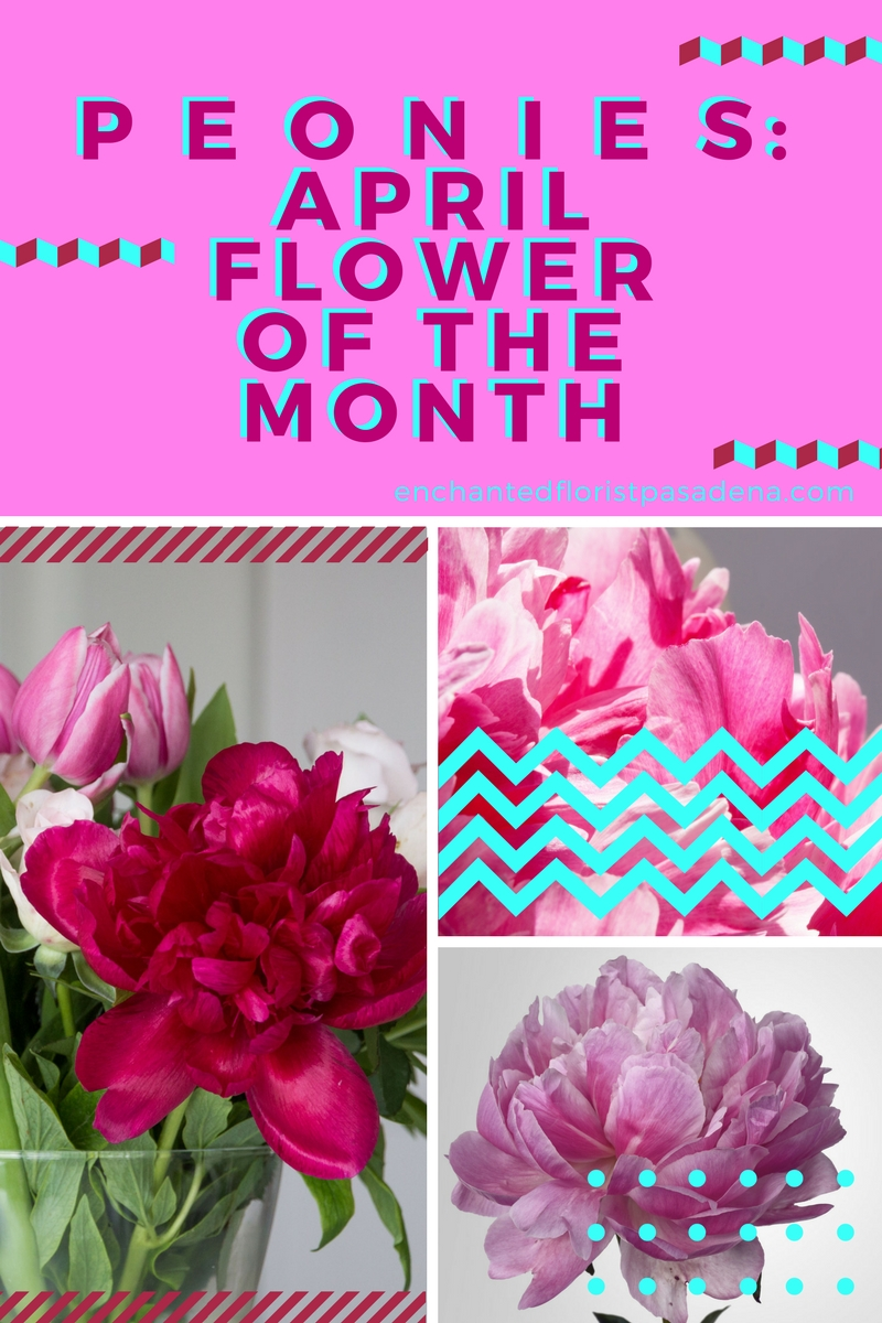 Peonies Flower if the Month florist in Pasadena TX