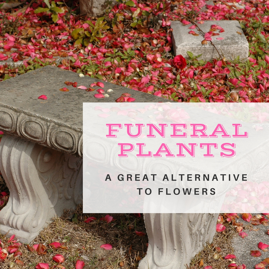 Alternative to funeral flowers gallery flower wallpaper hd funeral plants an important alternative to funeral flowers funeral plants an important alternative to funeral flowers izmirmasajfo