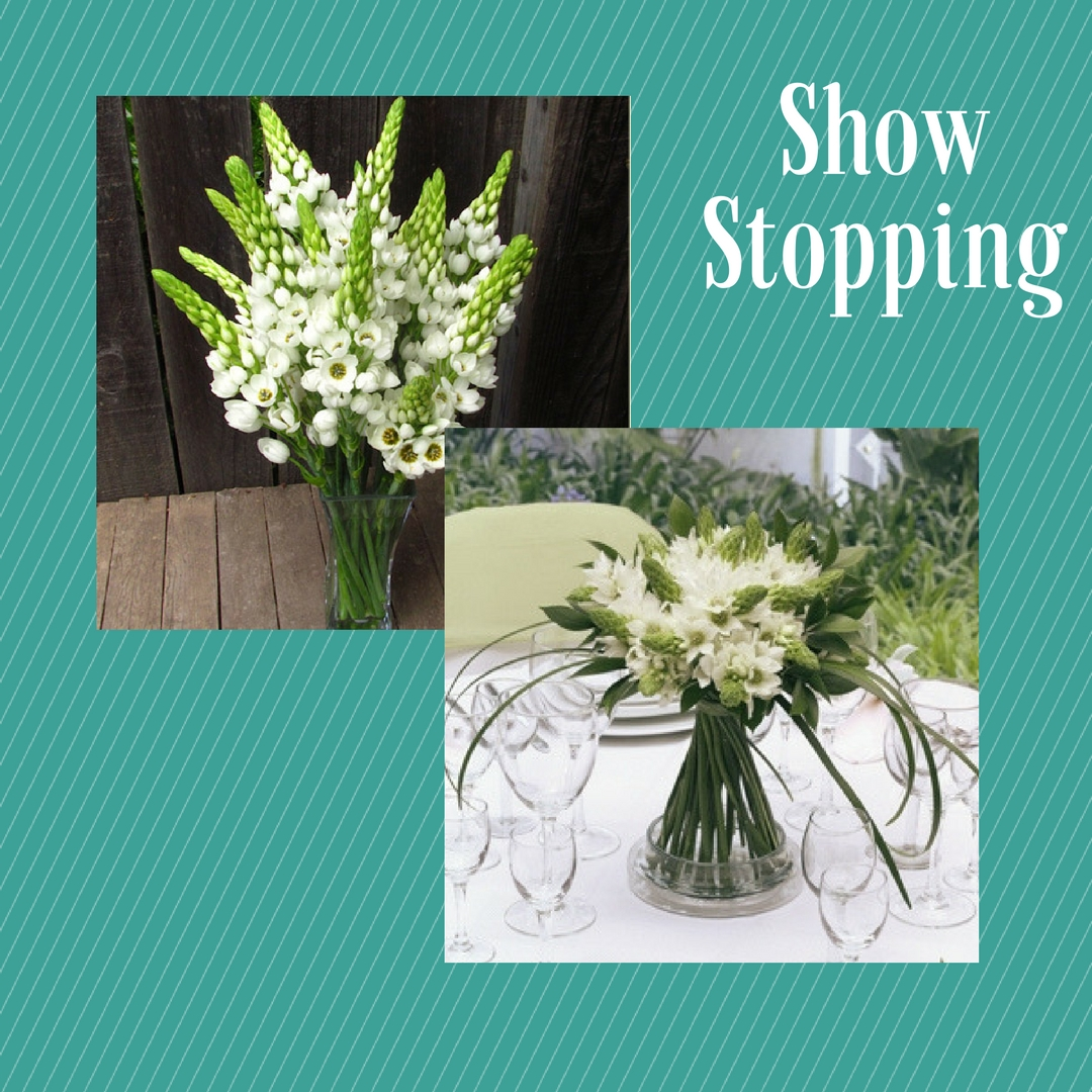 November Flower Spotlight The Star Of Bethlehem Enchanted Florist