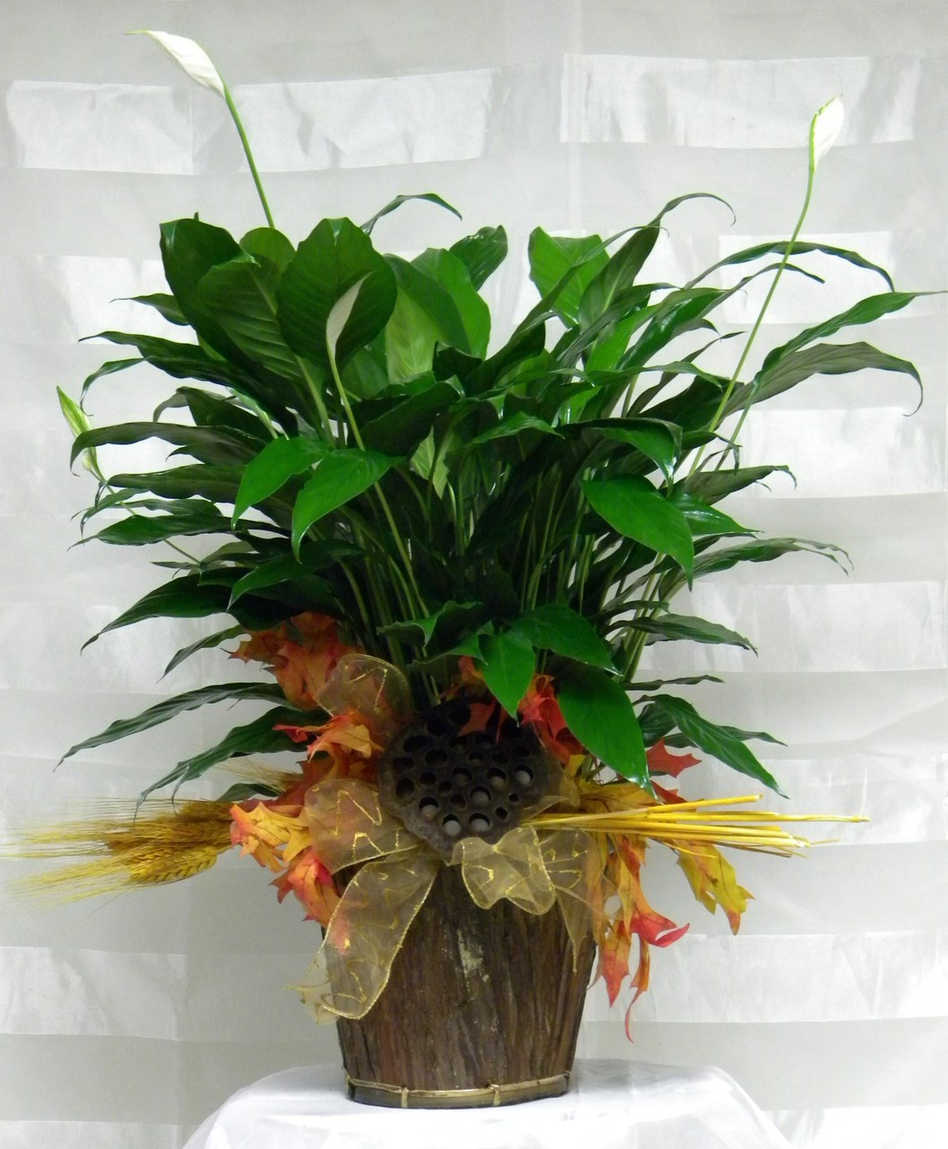 Fall peace lily fall spathiphyllium green plant same day delivery fall peace lily green plant by enchanted florist pasadena tx a lovely peace lily also izmirmasajfo