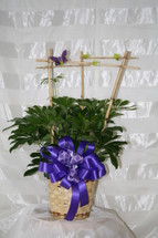 Hawaiian Schefflera with Bamboo Armature by Enchanted Florist Pasadena TX - a luscious green schefflera plant on a basket decorated in any color you would like and topped with a bamboo armature and butterfly. For information on how to care for a schefflera, please visit our blog. RM413