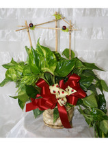 Ladybug Pothos Ivy with bamboo armature by Enchanted Florist Pasadena TX. Green plant with a bamboo armature for height with little ladybugs poking through. Green plants delivered in Houston TX. RM412