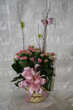 Colorful Kalanchoe Blooming Plant by Enchanted Florist Pasadena TX - beautiful pink blooming plant in a basket decorated with birch branches and a matching pink butterfly. Get plants delivered in Houston TX and surrounding areas with same day delivery or next day delivery. RM421