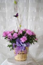Sweet Azalea Blooming Plant