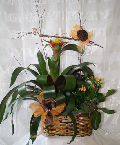 Orange Splash Tropical Bromeliad Basket by Enchanted Florist Deer Park TX - includes an orange bromeliad and orange kalanchoe for delivery by a real flower shop.  Best florist in Deer Park TX for beautiful green plant baskets delivered. RM439
