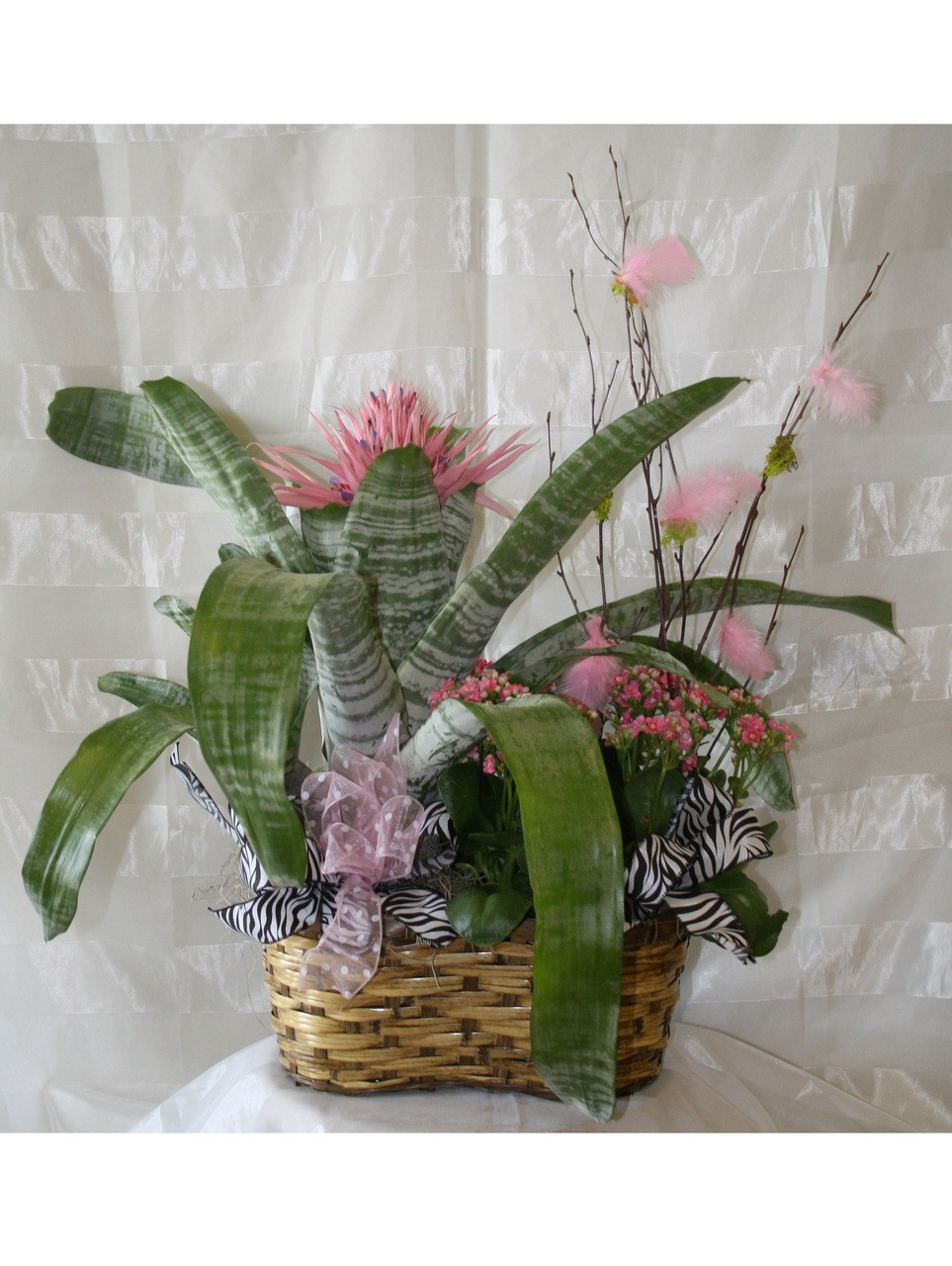Pink Cosmo Tropical Bromeliad Blooming Garden With Same Day Delivery