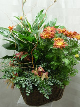 Grand European Blooming Garden by Enchanted Florist Pasadena TX - funeral plants for the home. Blooming garden can be delivered to the family's home address after the funeral. RM410