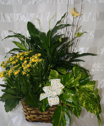 Basket of Grandeur Blooming Garden by Enchanted Florist Pasadena TX - Funeral plants, flowering plants, potted plants all with same day delivery. RM431