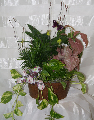 Cheerful Wishes Green Plant English Garden by Enchanted Florist - basket of green plants decorated for delivery. We offer same day and next day delivery to La Porte TX 77571 and surrounding areas. RM434