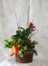 Blooming English Garden by Enchanted Florist Pasadena TX - Cute blooming garden for small table or hospital. RM433