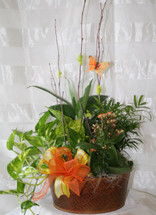 Blooming Chic English Blooming Garden - Assorted green and blooming plants in a basket make a nice presentation and a long lasting gift for any plant lover. Great to send for any occasion - or no occasion at all! Includes birch branch and colorful butterfly. Channelview green plant delivery. RM435