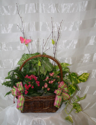 Blooming Beauty English Blooming Garden by Enchanted Florist. A wonderful basket full of blooming and green plants. This long lasting planter can be used for so many different occasions. Includes birch branches and colorful butterfly. Same day delivery to Downtown Houston and surrounding areas. RM437