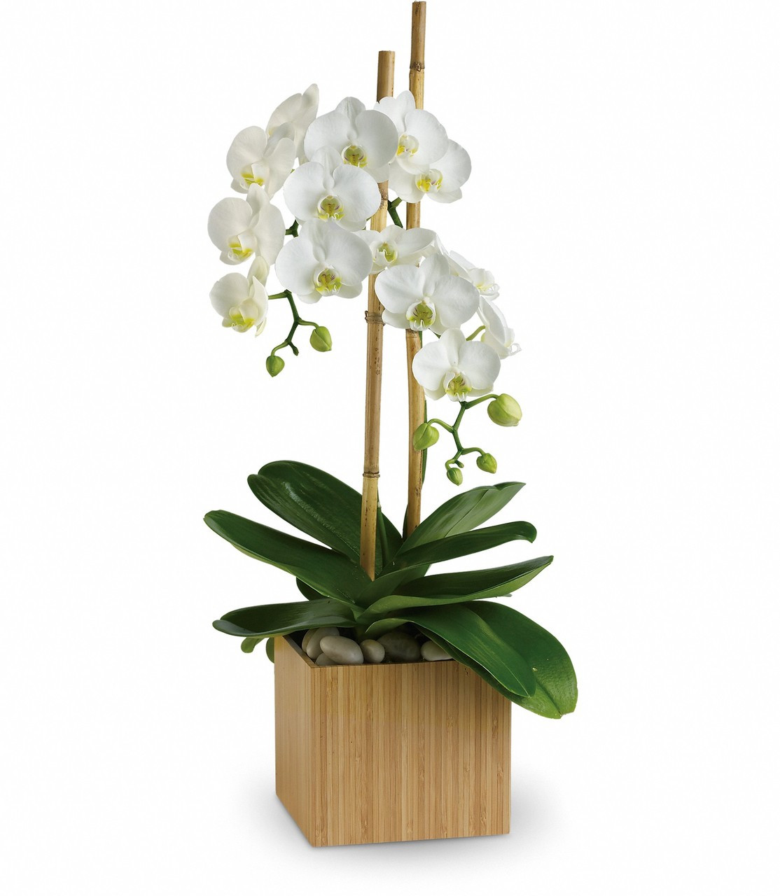 Beautiful orchid flower delivery in houston tx by enchanted florist elegant opulent orchid plant by enchanted florist tx orchid flower delivery in houston tx and izmirmasajfo