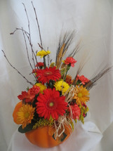 Pumpkin Harvest Fall Flower Bouquet by Enchanted Florist in Pasadena TX. Send lovely fall flowers in our keepsake pumpkin container. The flowers include orange gerberas, butterscotch cushions, yellow poms, wheat grass, berries and other fall accents.  RM206