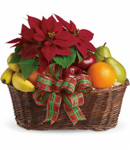Fruit and Poinsettia Christmas Basket from Enchanted Florist Pasadena TX. Perfect for family, friends and business associates, this generous gift delivers luscious fresh fruit, a brilliant red poinsettia and a whole lot of holiday cheer. 135-1