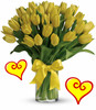 30 Yellow Tulips for Valentines Day by Enchanted Florist Pasadena TX.  Thirty yellow tulips are long lasting and a beautiful non traditional option for Valentines Day for when your special someone wants you to think outside the box, and want something other than the traditional red and pink colors. Yellow tulips are bright and happy! RM951