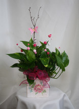 Perfectly Planted Ivy in Pink Cube from Enchanted Florist. This pothos ivy green plant includes the pretty pink decorations, pink butterfly, and is hand delivered in the ceramic container for a perfect gift.