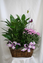 """Blooming Mum and Green House Plant Double Basket from Enchanted Florist. Our beautiful and luscious double basket with one green house plant and one blooming plant arrives in a wicker basket and is accented with various ribbons and branch with a butterfly flying about.  Approximately 26""""H x 22""""W SKU 457"""