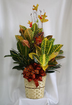 """Croton Plant with Fall Decoration - Medium from Enchanted Florist. This colorful leafy plant with its thick stems makes a fantastically fall gift. Known for its beautiful autumn color scheme, this brilliant green plant with dazzling yellow, orange, red and green leaves makes a perfect gift for almost any occasion. Low-maintenance, high quality. Includes birch branch, fall leaves, and ribbon treatment. Approximately plant size is 32""""H x 20""""W. SKU RM461"""