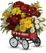 Baby Girl's WOW Wagon Bouquet of Flowers from Enchanted Florist.  Sunny yellow spray roses, bright red gerberas and red matsumoto asters, white and yellow daisy flowers, white buttons and solidago are lovingly arranged in a wagon. New It's a Girl flowers in little red wagon. SKU RM316